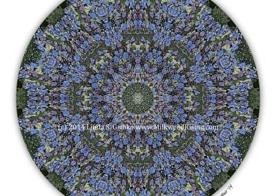 Blue Lace Hydrangea