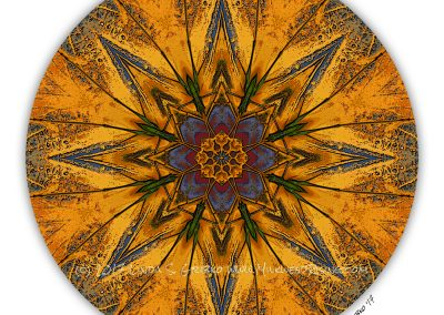 Eight Batik Katydids