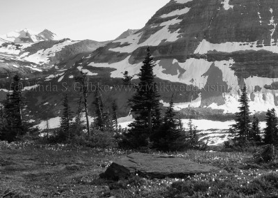Logan Pass No. 9