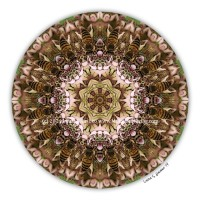 Communion of Bees Mandala