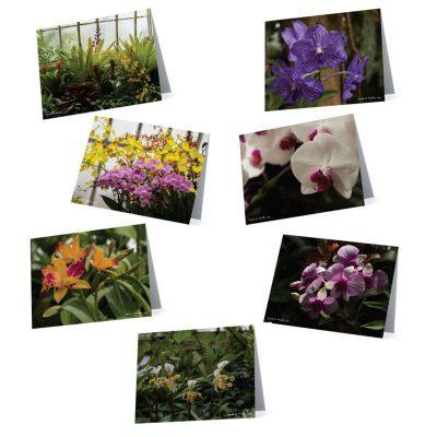 2017 Orchid Card Set I B