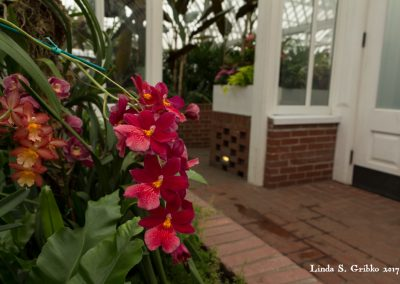 Red Orchids By the Doorway