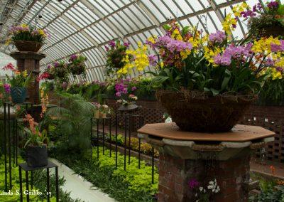 Sunken Garden Majesty