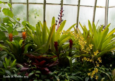 Yellow Spray in the Glasshouse