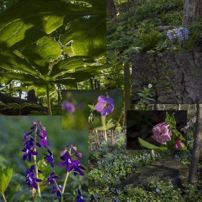 Spring Ephemeral Wildflower Workshop Square
