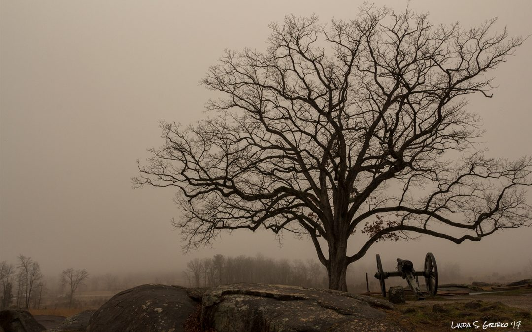 Foggy Day at Devil's Den